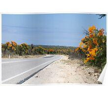 Nuytsia Floribunda In Western Australia Poster