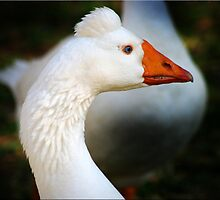 Goosey Gander by Kym Howard