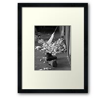 In the Shearing Shed Framed Print