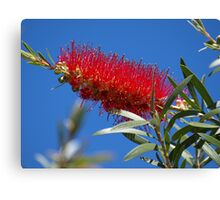 Pretty in Red! Canvas Print