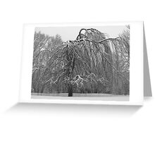 Weeping Willow In Winter Greeting Card