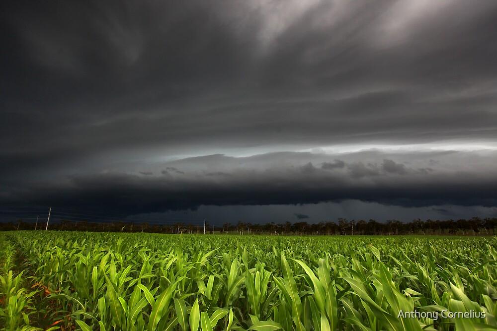 Hervey Bay Storm by Anthony Cornelius
