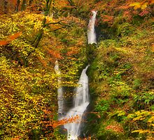 Stock Ghyll Force by Michael Simon