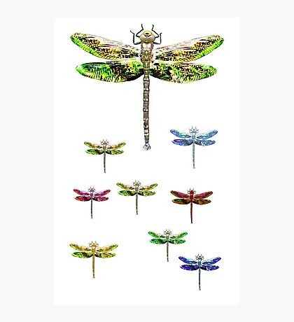 dragonfly squadron Photographic Print