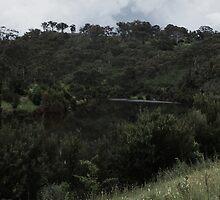 Drowning Trees - Googong #7b - Nov 2010 by tmac