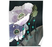 White Opium Poppies  Poster