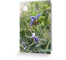 Stypandra glauca (Nodding Blue Lily) Greeting Card