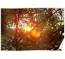 Sunspot through the trees Poster