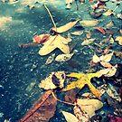 Fall  by Morgan Koch