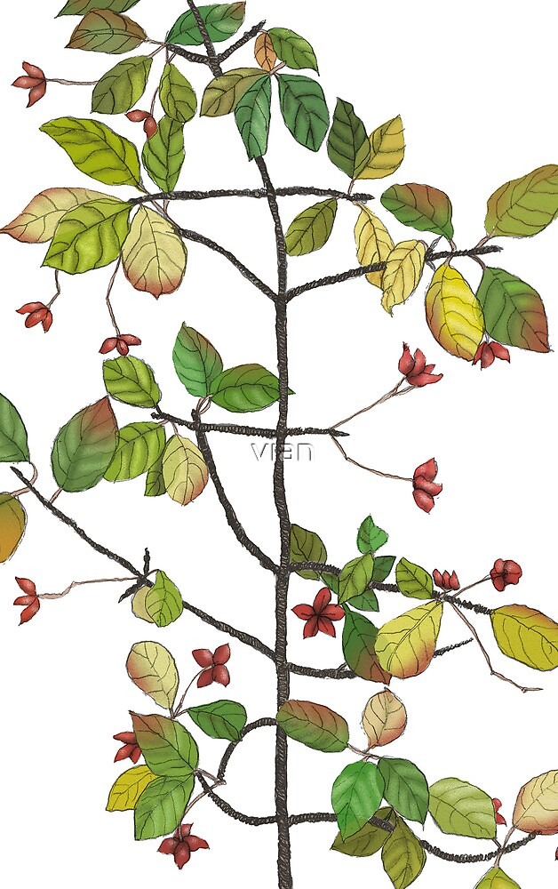 spindle tree  by vian