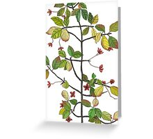 spindle tree  Greeting Card