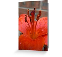 Lily Stamen - After the Rain Greeting Card