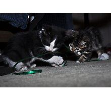 """ Kitten Christmas Wrap "" Photographic Print"
