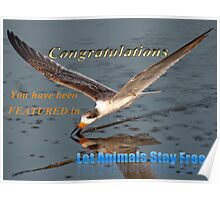 Let Animals Stay Free Banner Challenge Poster