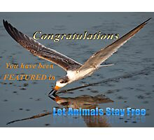 Let Animals Stay Free Banner Challenge Photographic Print
