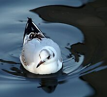 Placid Floating by Ritva Ikonen