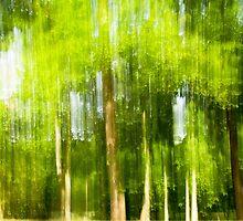 Trees in Motion by Thad Zajdowicz