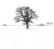 Tree in Winter by Circe Lucas