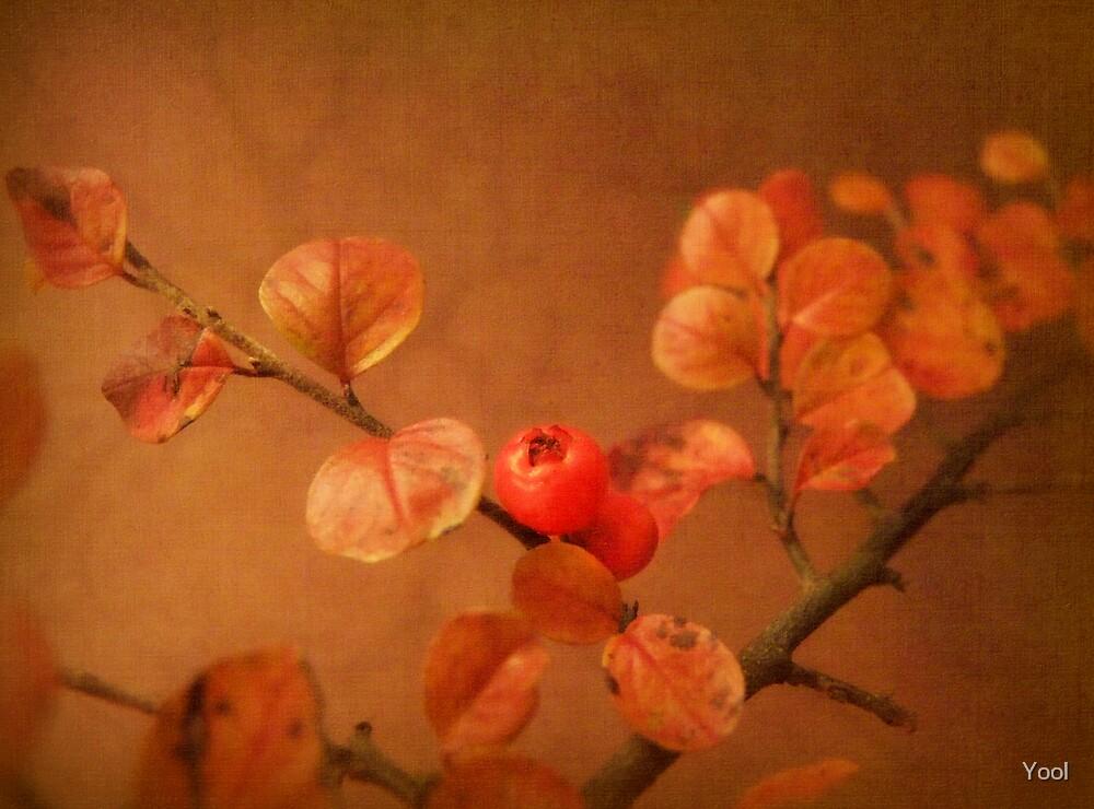 Autumn treasure by Yool