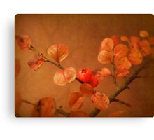 Autumn treasure Canvas Print
