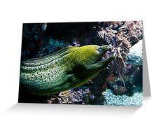 Conger Eel Greeting Card