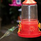 Hummingbird at the feeder by Philippe Widling