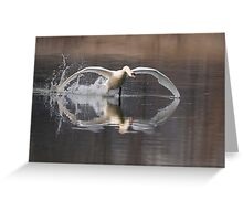 Mute Swan - Stoney Creek, Ontario, Canada Greeting Card