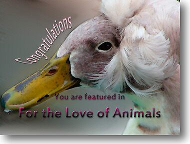 For the Love of Animals-Banner Challenge Design by vigor