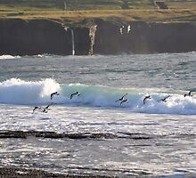 Oystercatchers surfing the waves by Karin  Funke