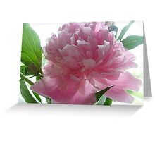 Gentle color Peony Greeting Card