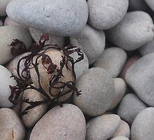 Seaweed Wrap by Karin  Funke