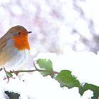 Snow Robin by Penny V-P
