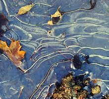 cold morning topography by Bruce Miller