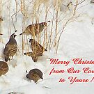 Quail Covey in the Snow by Betty E Duncan © Blue Mountain Blessings Photography