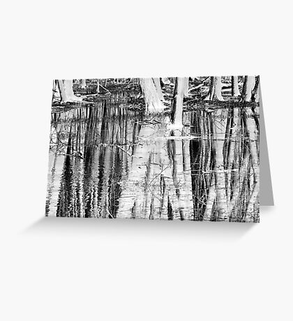 Wet Woodlands Greeting Card
