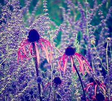 Hues of pinks and mauves. by Karen  Betts