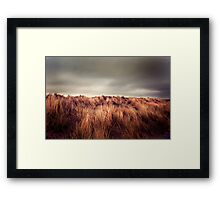 Marram Grass.. Framed Print