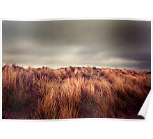 Marram Grass.. Poster