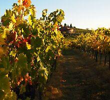 Vineyard by pljvv