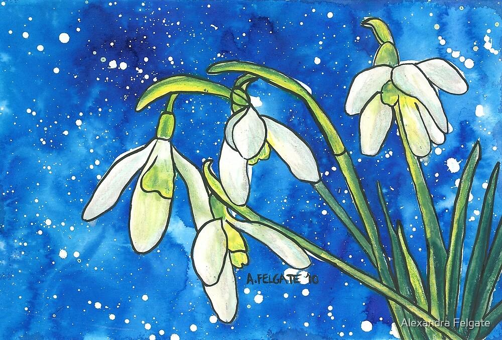 Snowdrops by Alexandra Felgate