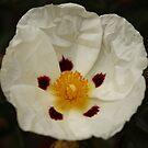 Beautiful Flower by AlexMac
