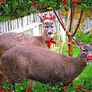 Reindeer Games by Angie O'Connor