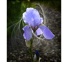 Fairy Tails Photographic Print