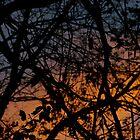 Tree Silhouettes in November Sky, Peach, Orange & Midnight Blue by Claudia Smaletz