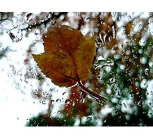 leaf on a windshield Photographic Print
