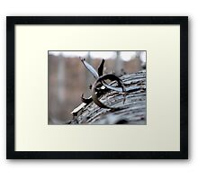 The Wooden Curl Framed Print