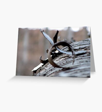 The Wooden Curl Greeting Card