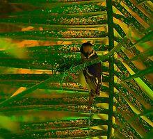 Bird making nest by Atanas Bozhikov Nasko