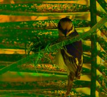 Bird making nest Sticker