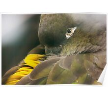 Burrowing Parrot Poster